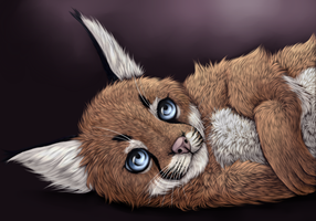 Caracal kitten by Griinz