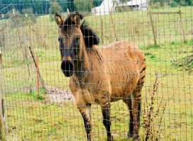 Got any goodies...? by wolfcreek50