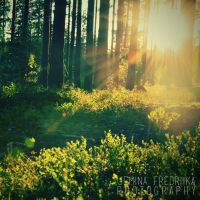 Sunshine in Finland by jeminafredriika
