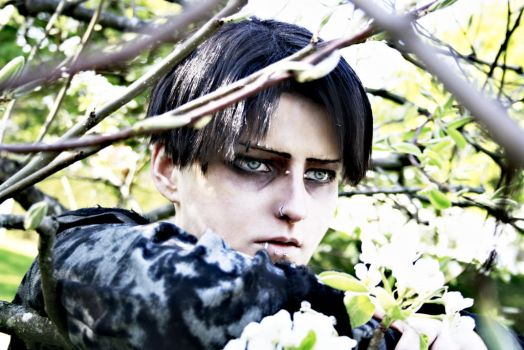 LEVI ACKERMAN - Cosplay - Testshot by Shinkan-Seto