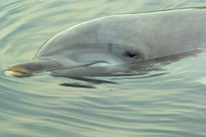 Meeting with dolphins by VXLPhotography