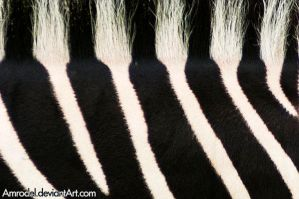 B-W Stripes by amrodel