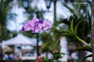 Orchids and cabana by gigi50