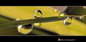 Drops of Nature.....IX by Betuwefotograaf