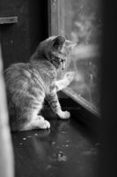 Small cat with his paw on the window by aleexdee