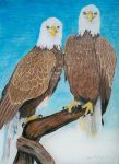 Bald Eagles by WindSong83