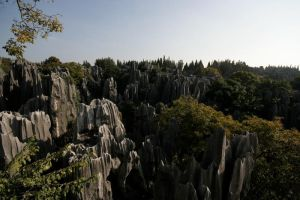 Stone Forest by creativehouse