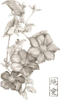 Flowers _ Clematis by Zetsuai89
