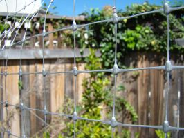 Life beyond the wire fence by stephuhnoids