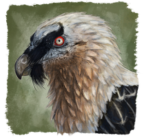 Bearded vulture by RiverRaven