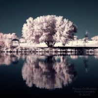 Cotton Candy Reflections by La-Vita-a-Bella