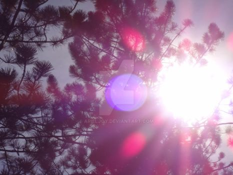 The Sun Decorates The Tree With Its Colors by ArielJoy