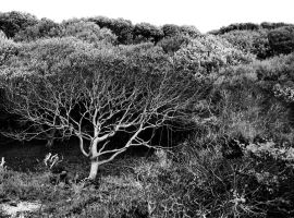 cliff tree by awjay