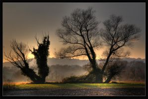 HDR Trees by digitalarts65