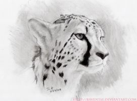 AP01- Cheetah by ravent61