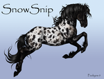 SnowSnip the mare by pookyhorse