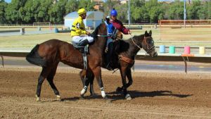 Racehorse Stock 24 by Rejects-Stock
