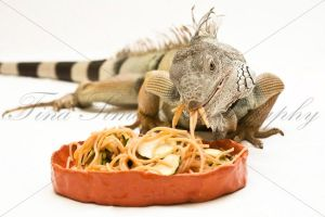 Green iguana eating pasta by TinaS-Photography