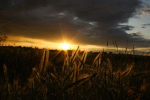 Arable Sunset by Hendo1991