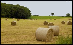 Grazing Bales by Hitomii