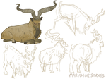 Markhor Studies by Scorchyz