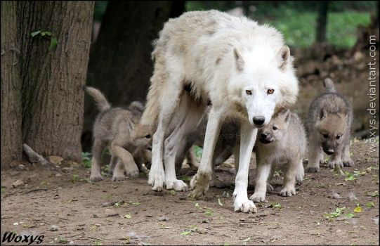 Lead the big pack, mommy! by woxys