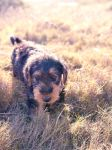 My New Dog by leighgriffiths