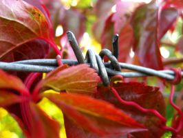 Autumn is here 10 by ThereseBorg