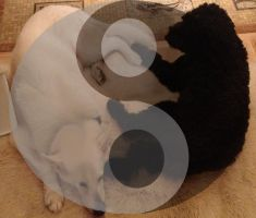 Ying Yang dogs by Rendever