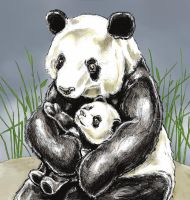 Panda gets a hug by tomographiser