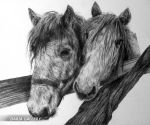horses by DariaGALLERY