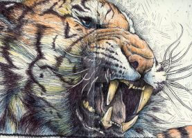 Tiger Roar Updated by FatCatDesigns