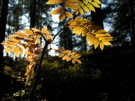 The yellow leaves in the forest II by Corvus-monedula93