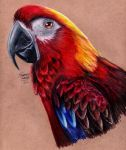 Cuban Red Macaw by KristynJanelle