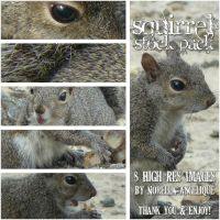 Squirrel Stock Pack by angellella-stock