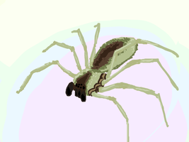 Brown Recluse by danceswithzerg