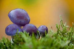 Purple shrooms by SarahharaS1