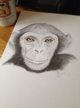 Chimp for Vee by Dragonfairy28