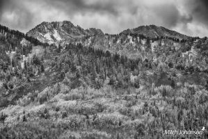 Blanket of Autumn Colors BW by mjohanson