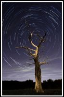 Star Trails - Dead Tree I by allanibanez