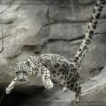 The Flying Cat 0282 by Sooper-Deviant