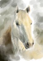 White Horse Head by GureeOokami