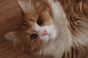 My lovely furbaby by Elinsch