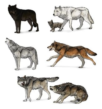 How to draw wolves: a complete tutorial by MonikaZagrobelna