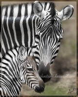 Zebra Mother and Foal Painting by Chaotica-I