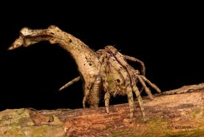 Tree Stump Spider 2 by melvynyeo