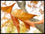 Autumn Leaves II by thr33face