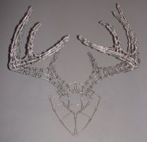 Whitetail Antlers by Zander23