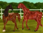 Fresita and Marynka by Golden-Horse-Stables