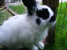 love you by Mayolijntje